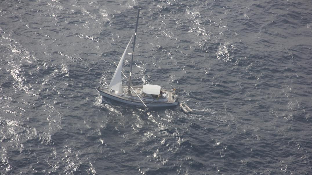 Tripulantes de veleiro resgatados após choque com baleia