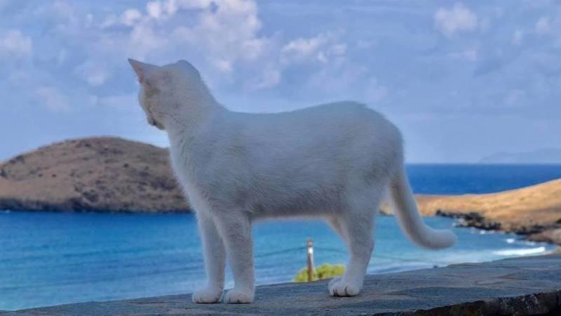 Procuram-se pessoas para cuidar de gatos numa ilha paradisíaca na Grécia. Com salário fixo e alojamento