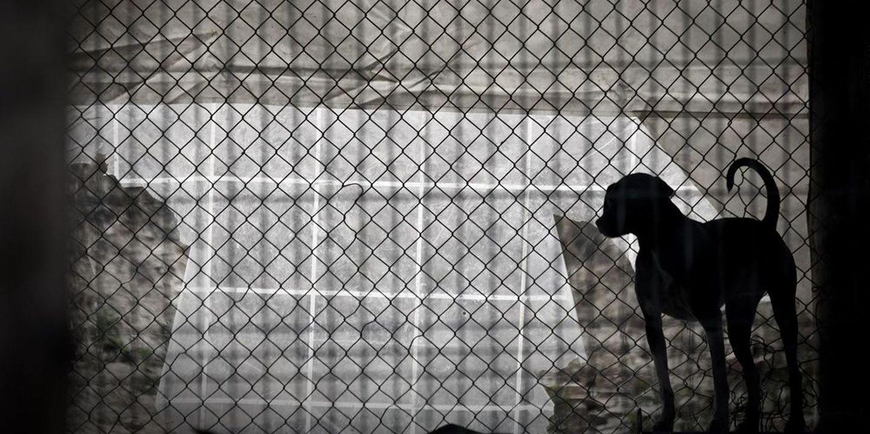 """Câmara de Braga garante estar """"na vanguarda"""" das política de proteção animal"""