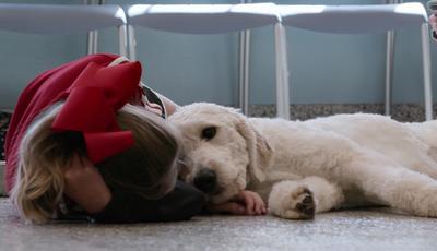 """""""O Melhor Amigo do Homem"""": a nova série documental da Netflix que está a comover a internet"""
