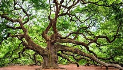 Florestas e árvores únicas ou insólitas