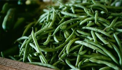 Feijão-verde, o bom amigo da cozinha e da saúde anda esquecido