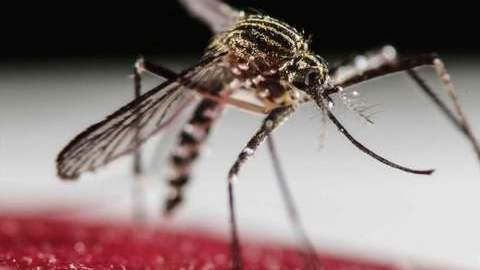 Moçambique ainda sem Zika vírus