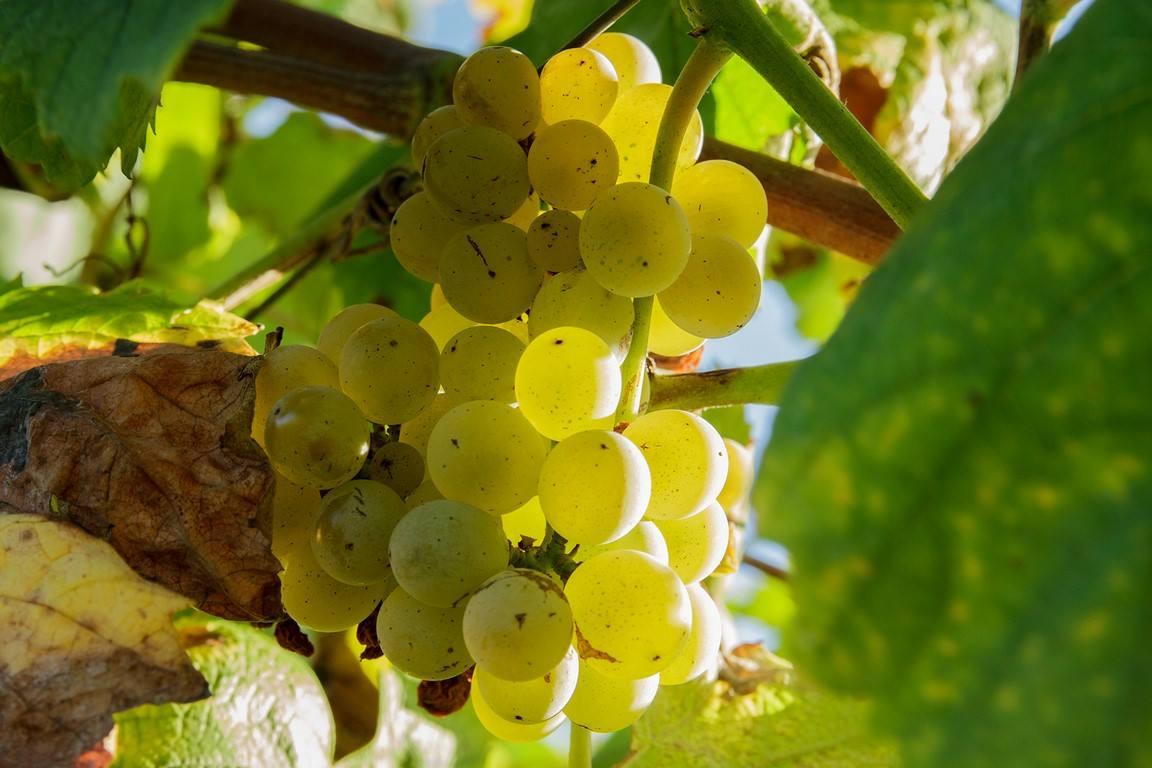 Quinta do Tamariz convida a visitar as vinhas e a provar vinhos de boa guarda
