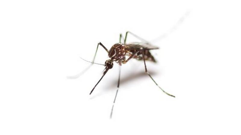 Será o mosquito o animal mais mortífero do mundo?