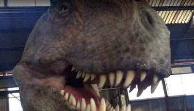 Dinossauros existem no Japão!