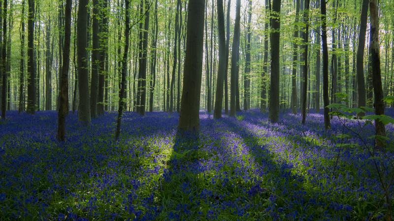 Locais na Europa para apreciar a primavera
