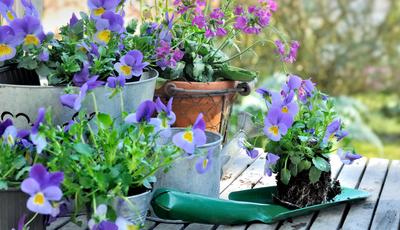 Os cuidados a ter com as plantas de verão na primavera