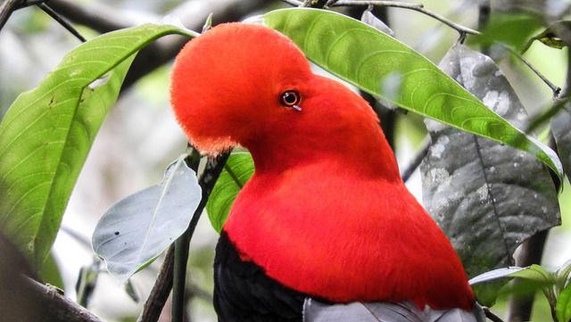 Colômbia vence competição global de observação de pássaros. Das janelas e varandas, foram registadas 1.440 espécies