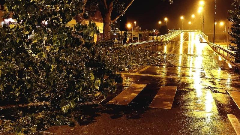 Mau tempo: Registadas mais de 160 ocorrências devido ao vento, a maioria queda de árvores