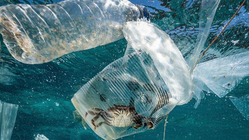 Qual o impacto económico do lixo nos oceanos? Só a pesca perde 162 milhões de euros