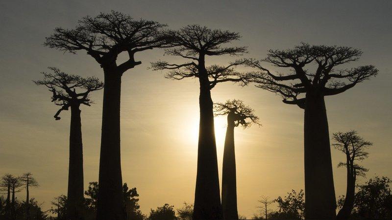 Estas são algumas das árvores mais estranhas e icónicas do mundo. Quantas já viu ao vivo?