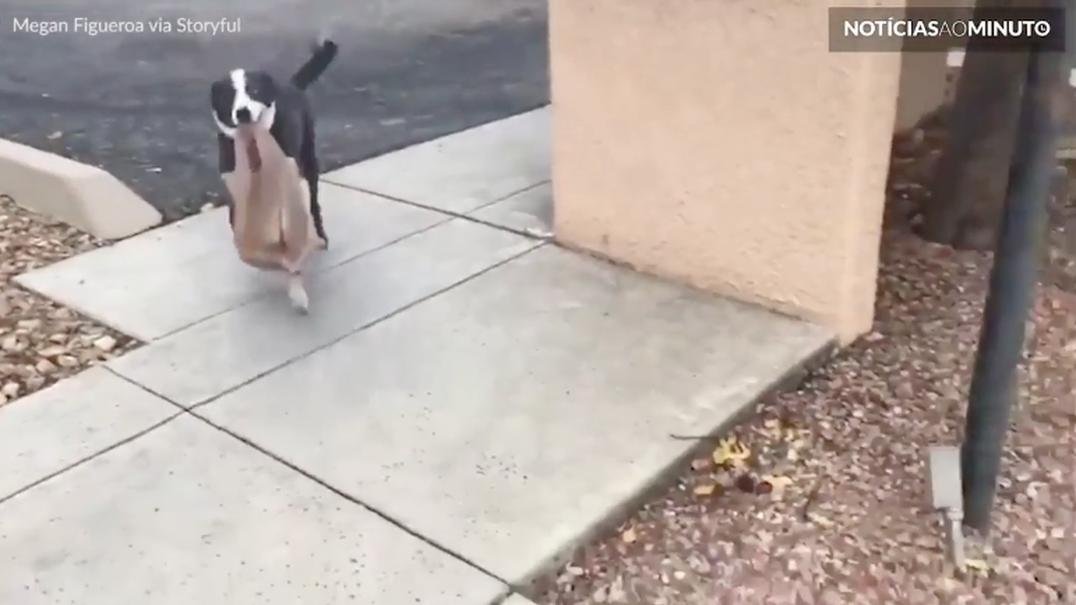 Cão ajuda a transportar os sacos de compras