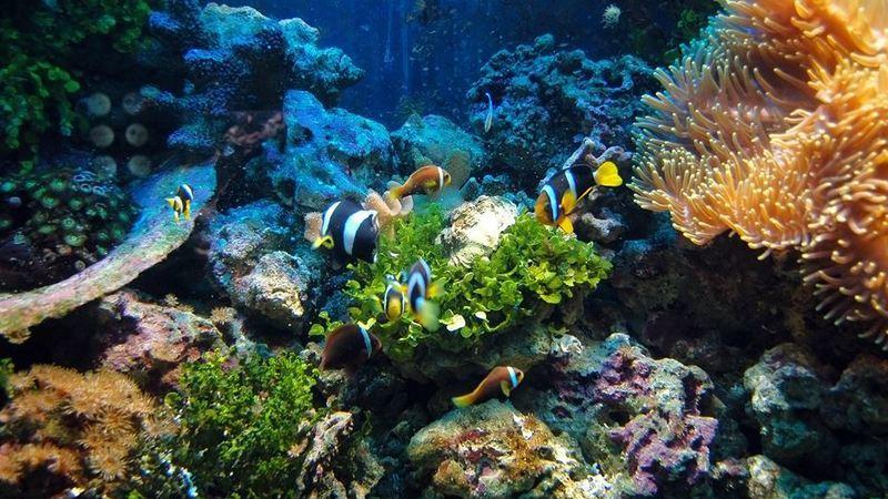 Conheça alguns dos maiores recifes de coral do mundo