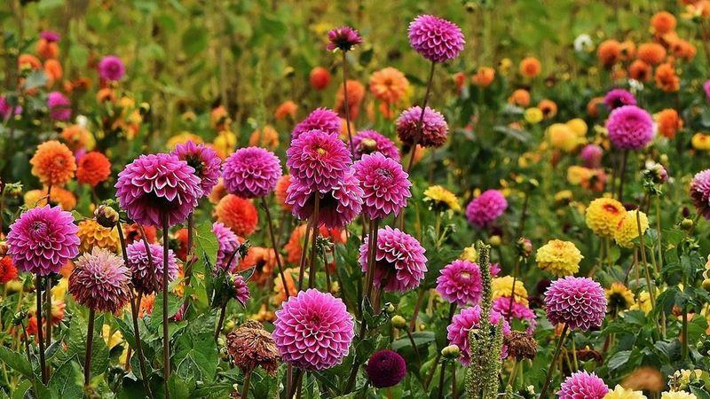 Alegre a sua casa com as melhores flores outonais