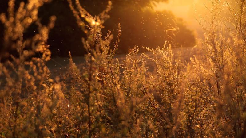 Farto de sofrer com alergias? Tire as suas dúvidas com um especialista