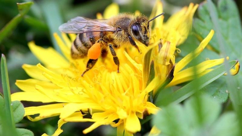 Petição europeia quer medidas para salvar abelhas e agricultores