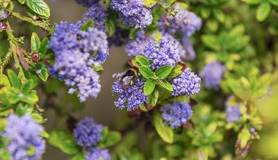 Tenha um jardim sempre florido. As plantas com floração longa que são um bom investimento