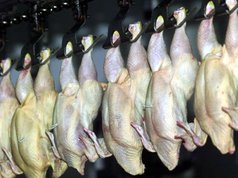 União Europeia vai rejeitar parte da carne brasileira que está a caminho da Europa
