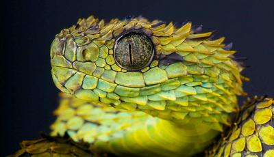 Fotografa animais perigosos há 27 anos e anda a recolher fundos para publicar as melhores imagens em livro