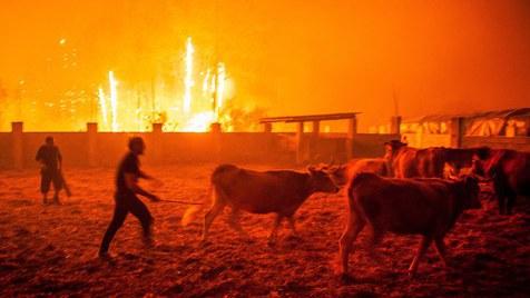 Há incompetência na gestão da prevenção e combate aos incêndios