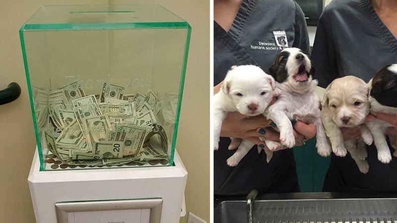 Anónimo doou mais de 7 mil euros a um abrigo de animais nos EUA