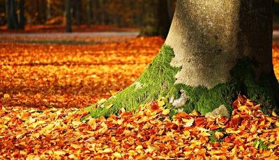 Outono. O sopro