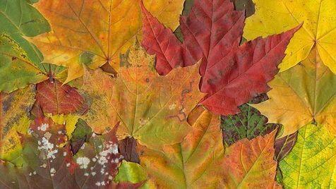 Depressão de outono à vista