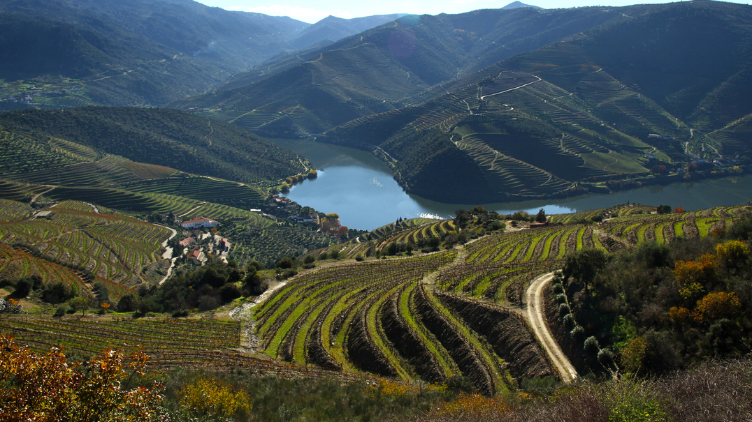 Portugal vendeu cerca de 296 milhões de litros de vinho em 2019